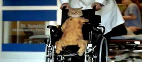 wheelchair_cat