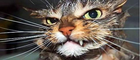 Punchbaby_cat