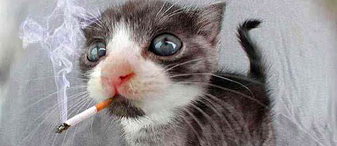 kitten_smoking