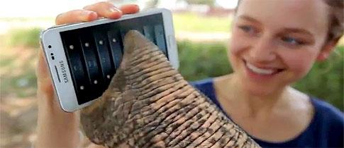 Samsung_Elephant
