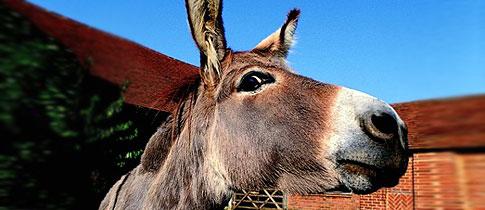 Donkey_Semen_Stunt_Fear_Factor