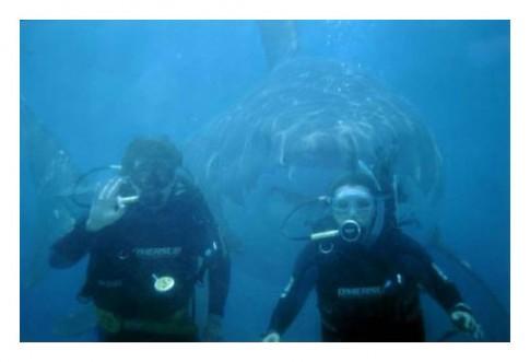 SharkSnackIn321