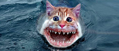Kitty-Shark