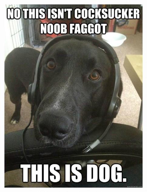 DogPlaysHalo