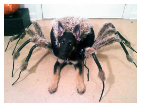 HalloweenCostumeLvlFREAKINGSCARY
