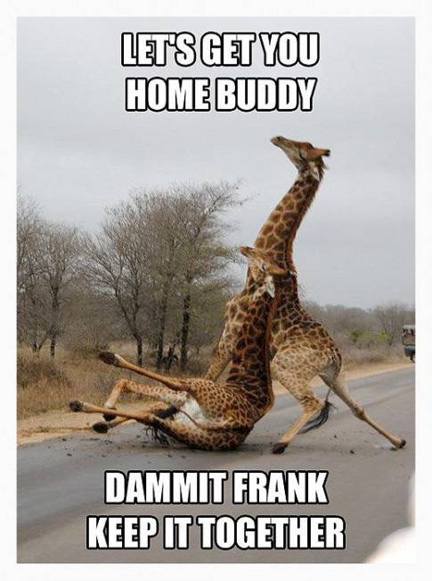 JustDrunkGiraffes