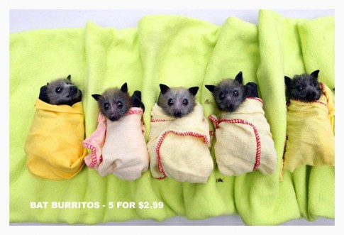 BatBurritos