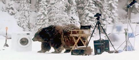 Samsung-Bear-Punchbaby