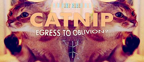 catnip1