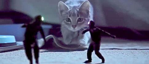 kittens-on-the-beat