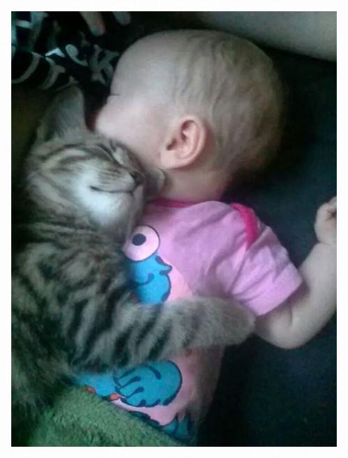 CatsLoveWarmTinyHumans