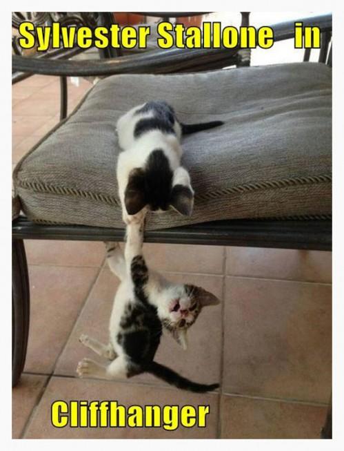CatsRecreateClissicActionMovies