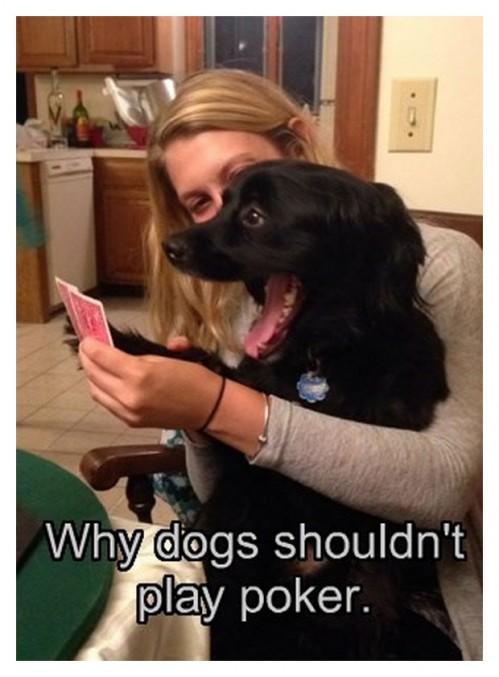 DogsMakeAwfulCardPlayers