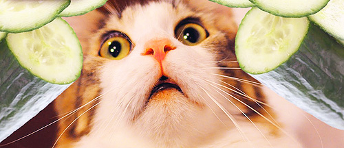 Cats-Getting-Scared-by-Cucumbers
